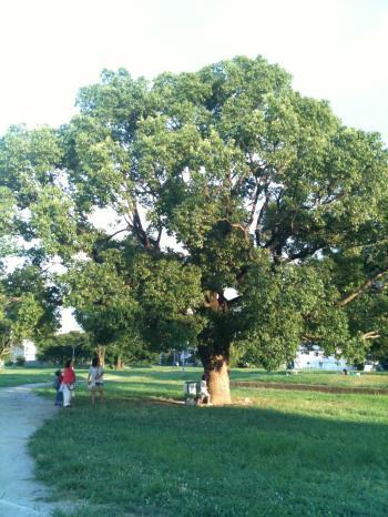 難波宮跡の木