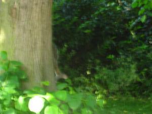 木を駆け降りるりす
