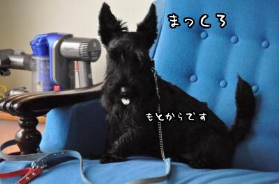 DSC_2712.jpg