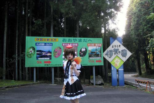 関秋桜05