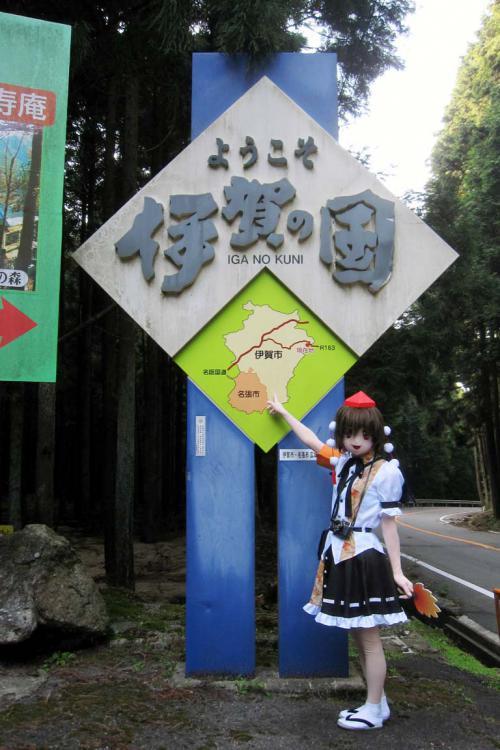 関秋桜07