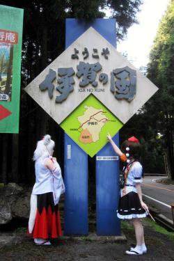 関秋桜12