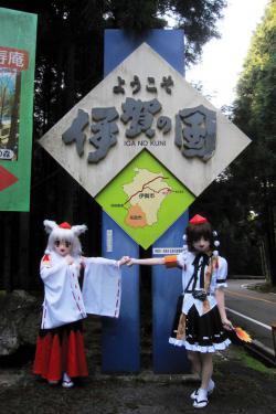 関秋桜11