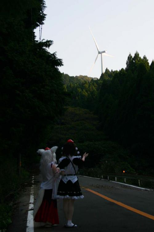 関秋桜20