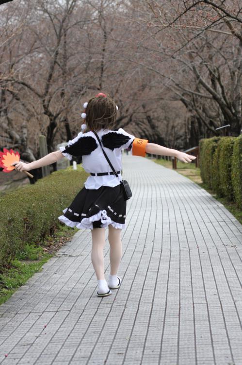 桜ロケ09