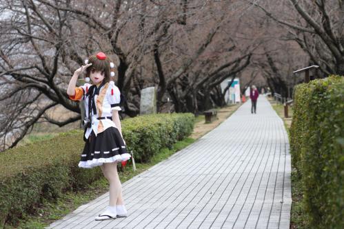 桜ロケ10