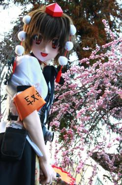 桜ロケ50