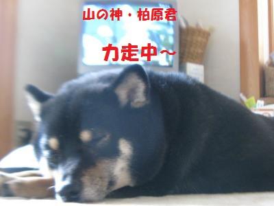007_convert_20120102181810.jpg