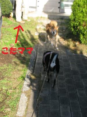 011_convert_20111213153447_20111213213409.jpg