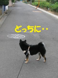 014_convert_20110927130300.jpg