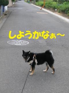 015_convert_20110927132039.jpg