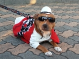 11-30Jamboさん愛犬