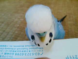 20100927061221.jpg