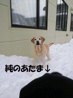 1100306_blogubu2.jpg