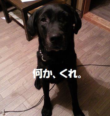 110218_blogjun.jpg