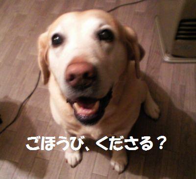 110218_blogubu.jpg