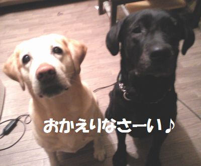 110218_blogubujun.jpg