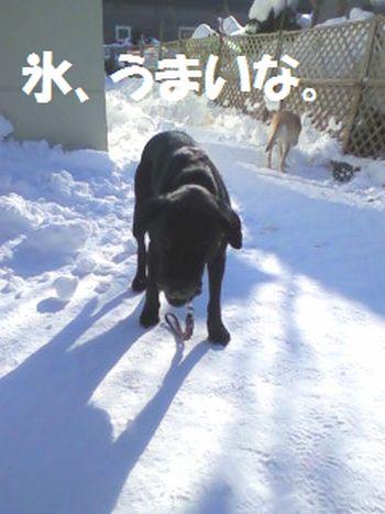 110219_blogjun.jpg