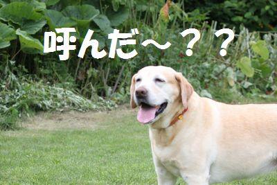 110221_blogubu4.jpg