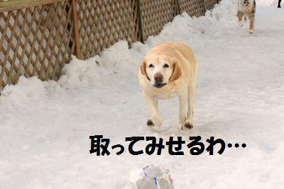 110221_blogubu6.jpg
