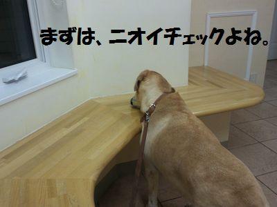 110224_blogubu1.jpg