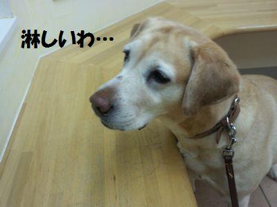 110224_blogubu4.jpg