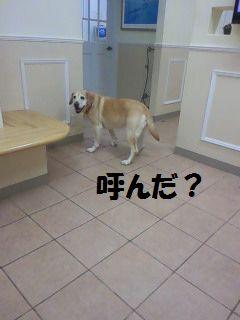 110224_blogubu6.jpg