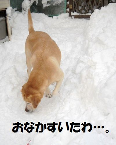 110305_blogubu1.jpg