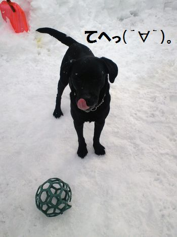 110306_blogjun1.jpg