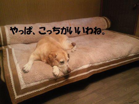 110306_blogubu1.jpg