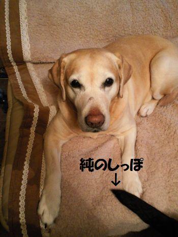 110308_blogubu.jpg