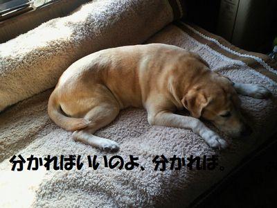 110321_blogubu.jpg