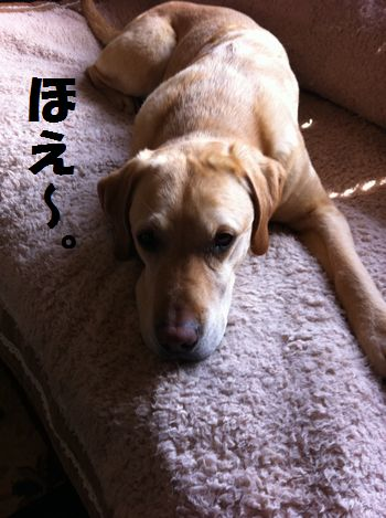 110517_blogtsubu1.jpg