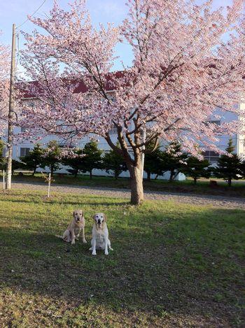 110517_blogubu1.jpg