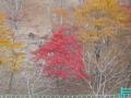 比叡山紅葉・1