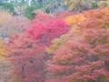 比叡山紅葉・2