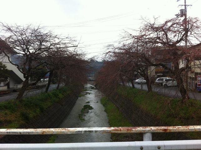 ゴンタニ枝垂桜