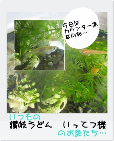 cats_20100614231542.jpg