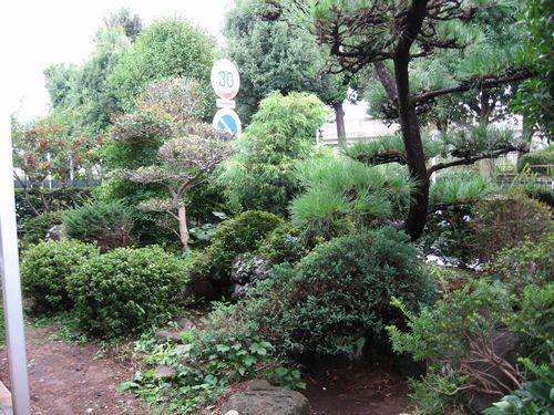 解体前の庭