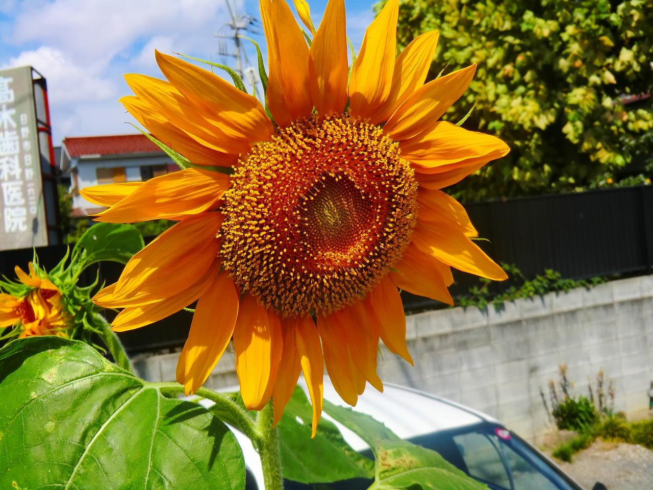 2011_0916_105529-CIMG1619.jpg