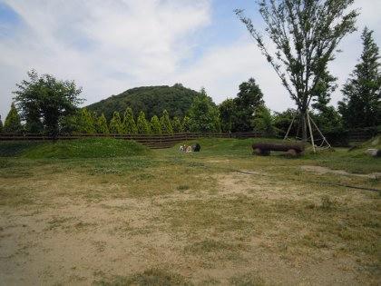 DSCN4239.jpg