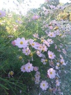 111020 ルーラルカプリ農場 花壇
