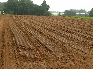 肥料撒き後の畑