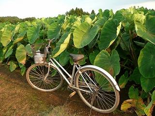 自転車とセレベスと
