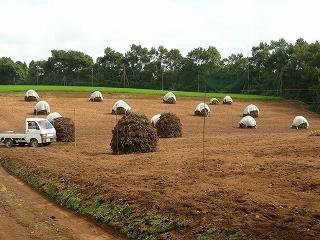落花生ドームを作り終えた畑