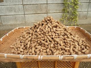 乾燥落花生 5キロ