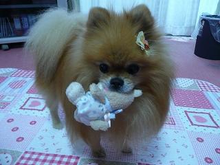 愛犬おもちゃ遊び2
