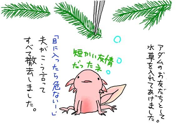 20090810mizukusa_fc2.jpg