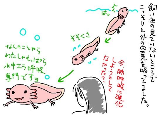 20090819haikokyu_fc2.jpg