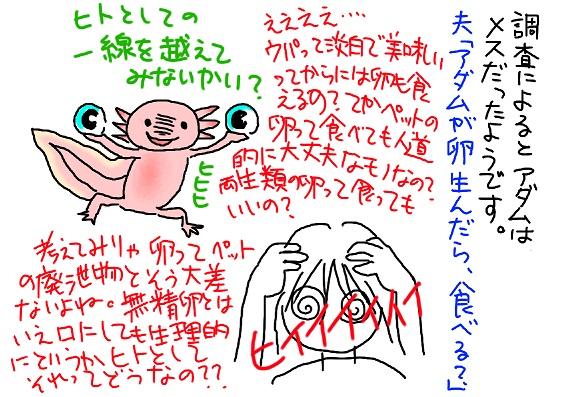 20090824egg_fc2.jpg